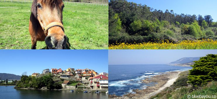 Animals, meadows, villages and the coast: the untraditional Way of St. James from Santiago to Porto.