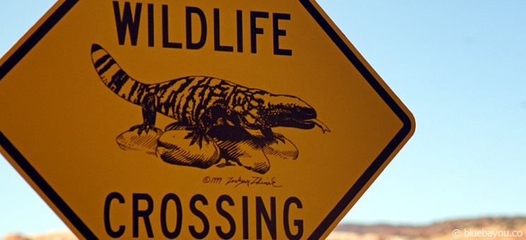 A wildlife crossing sign: places with a guarantee for meeting real wild animals would be a true insider tip.